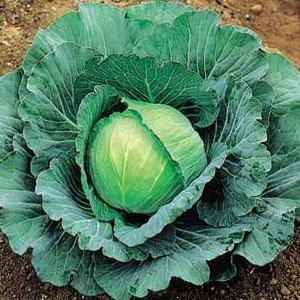 Комментарии к капустной диете