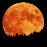 Отзывы о лунной диете