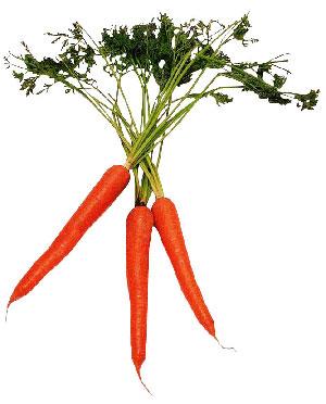 Отзывы о морковной диете